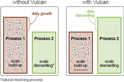 Daily growth of scale